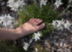 foot-1642072_1920.jpg