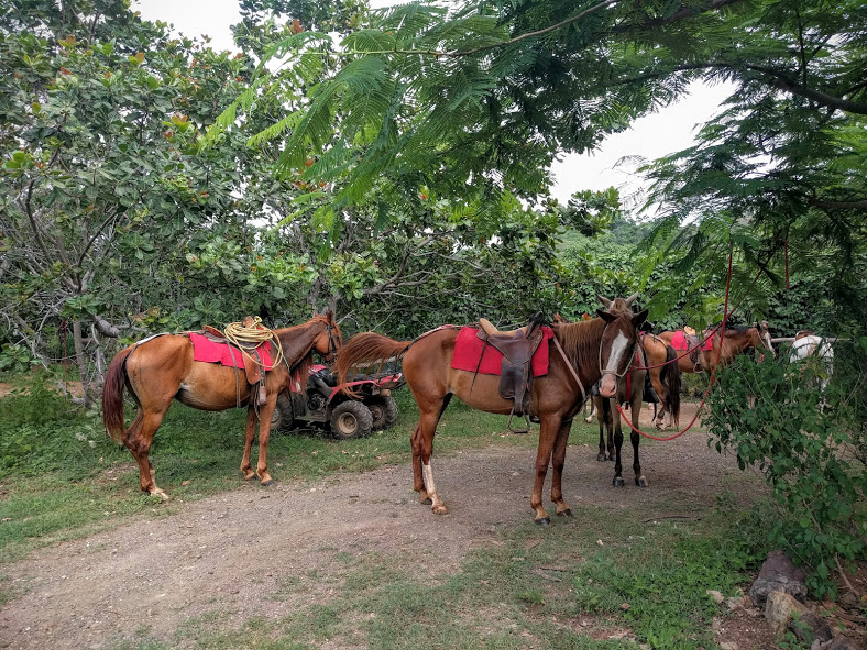 Horseback Riding in Guanacaste, Cost