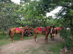 Horseback Riding in Guanacaste, Cost