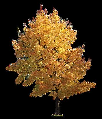 TreeGolden.png