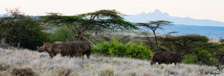 Rhinos with Mt. Kenya