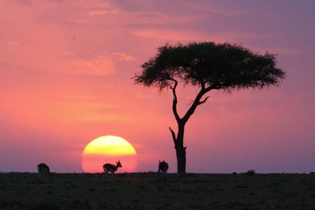 Mara at sunset