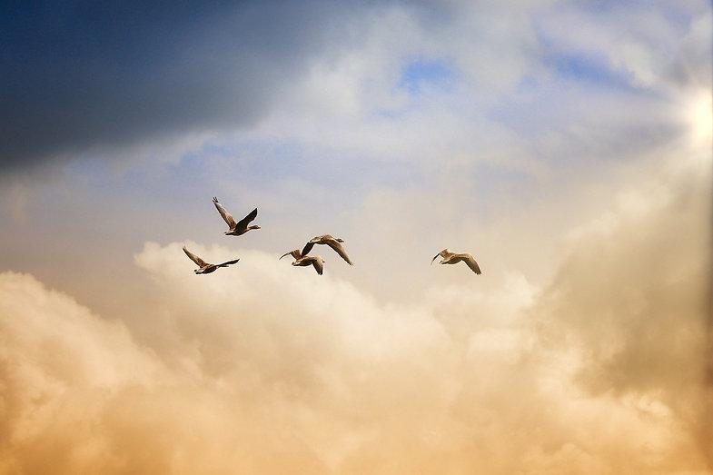 birds-5159711_1920.jpg