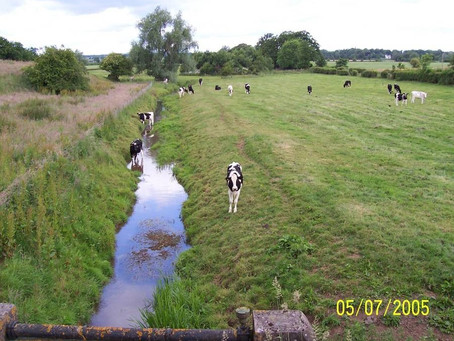 Cattle and Riparian Zones