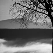 NV_P23_Arbre_nuage_modifié-1.jpg
