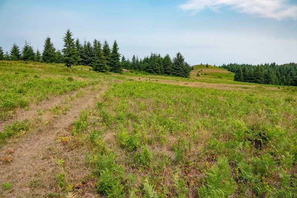 Photo of meadows at Mt. Hebo, Oregon