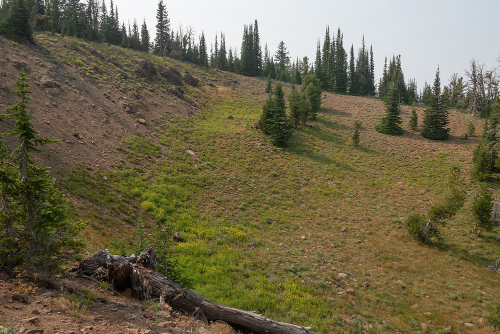Photo of meadow on east slope of Mt. Howard