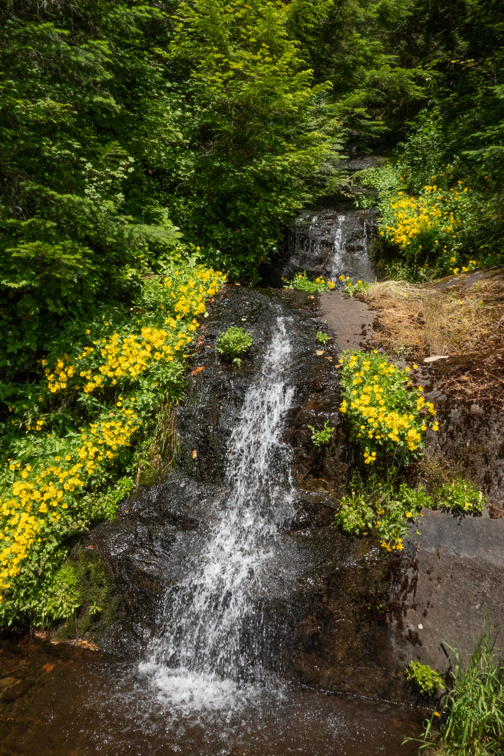 Photo of Parker Creek Falls on Marys Peak, Oregon