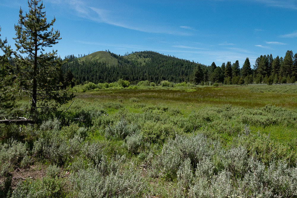 Photo of a mixed wet and dry meadow near the Izee-Paulina Road