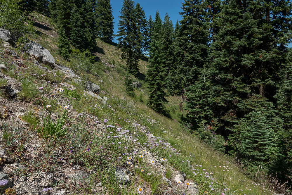 Photo of steep rocky meadow near Mt. Ashland