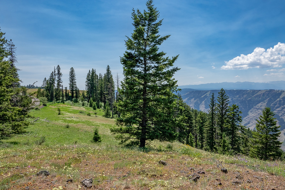 Photo of meadows on the south end of Summit Ridge