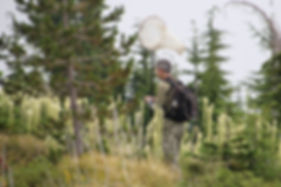 Author and net in the field at Bachelor Mountain
