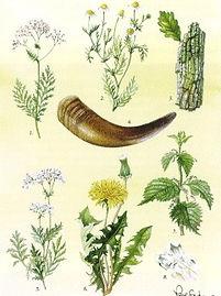 praparatepflanzen-poster_edited.jpg