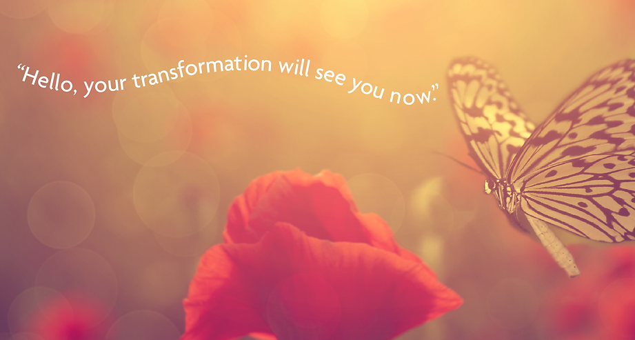poppies_butterfly_twitter-01.png