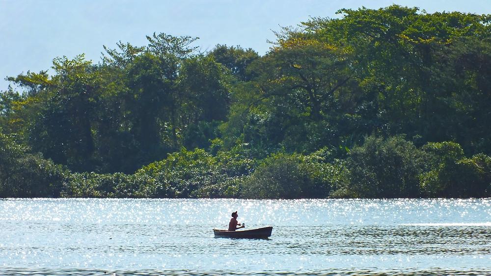Manguezal do estuário de Santos e São Vicente. Foto: William R. Schepis/Instituto EcoFaxina