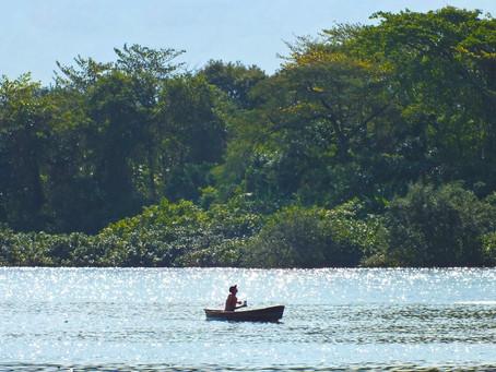 Coca-Cola FEMSA Brasil promove mutirão de limpeza de resíduos no manguezal de Santos