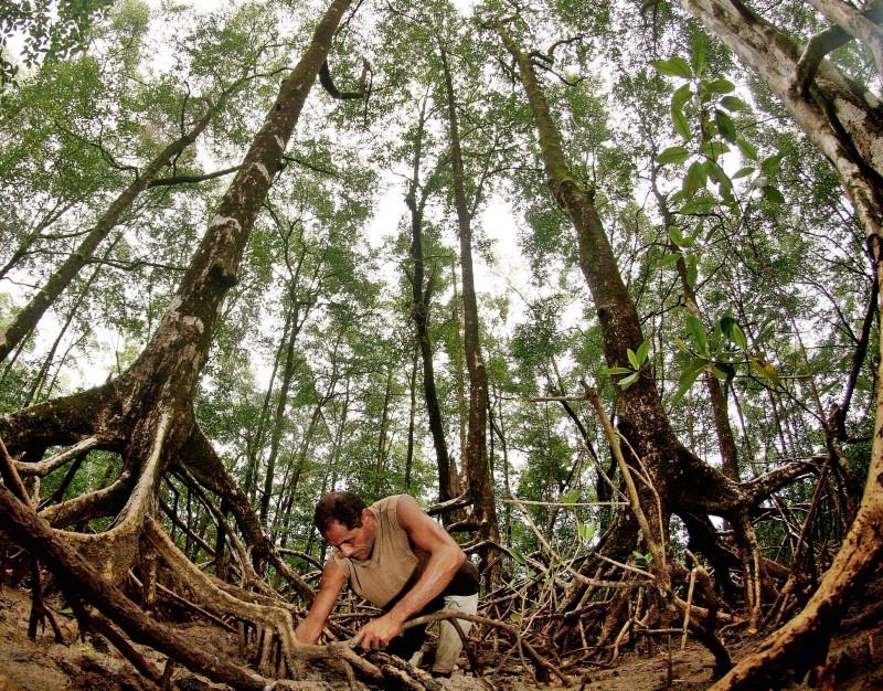 Catador de caranguejo no Pará. CC