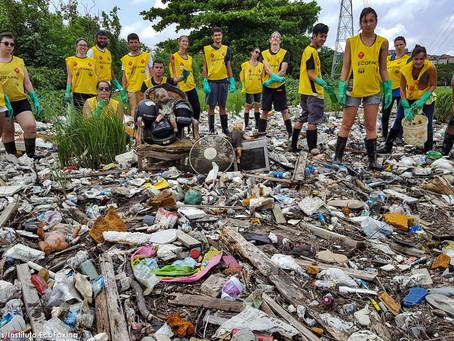 Instituto EcoFaxina e Greenpeace unem forças para limpar manguezal em Santos
