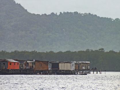 manguezal-palafitas03-william_schepis_instituto_ecofaxina.jpg.jpg
