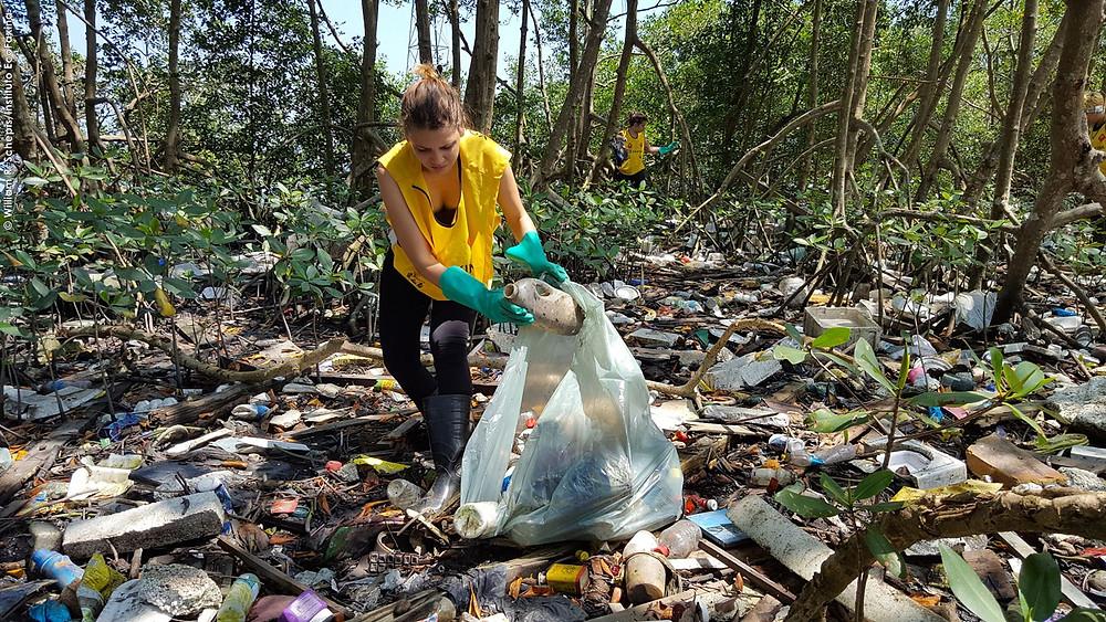 Voluntária coleta plástico em manguezal de Santos.