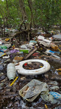87av_ecofaxina_mangrove14.jpg