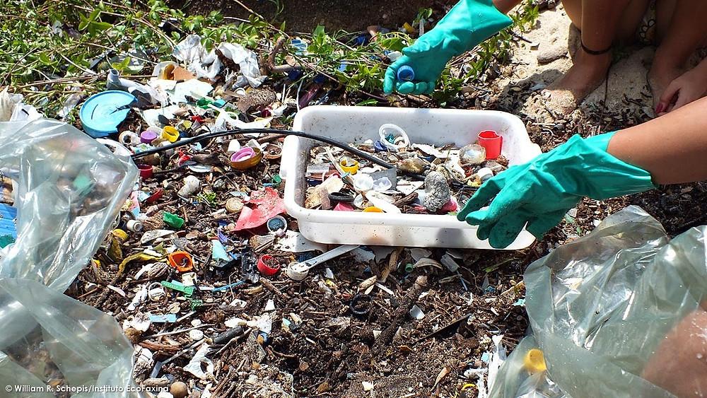 Calouros coletam plástico na praia do Saco do Major durante o Trote Ecológico EcoFaxina 2013. Fragmentos e pequenos objetos de plástico, como tampinhas de garrafas PET, são frequentemente ingeridos por diversas espécies de animais marinhos que os confundem com alimentos.