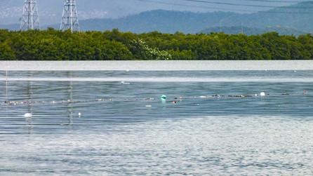 82av_ecofaxina_mangrove28.jpg