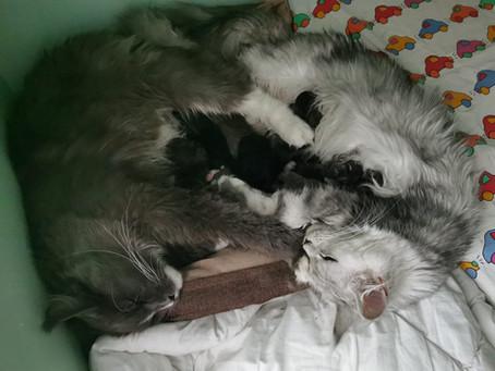 Leah och Rangans förlossning