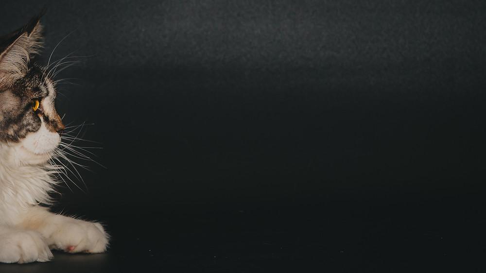 Lenny Rossolovsky méregtelenítő program aszcariasis helminth