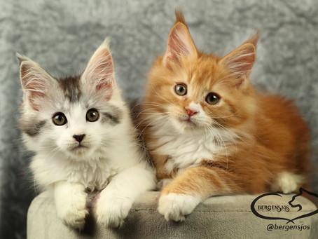 Chili och Inez har flyttat och fyller nya familjer med kärlek.