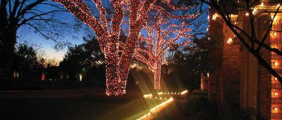 ana luna - Tree and Ground Lighting.jpg