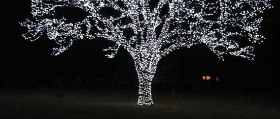 ana luna - Tree to Tips.jpg