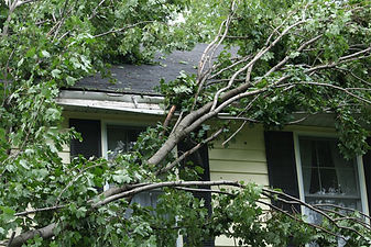 Tree-branches-over-roof-2.jpg