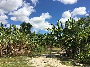 20181031+sugarcane.jpg