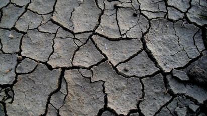 [個案分析] 久用類固醇遺下的樹皮肌