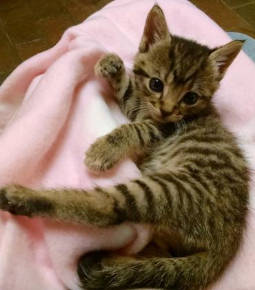 Oyster kitten 3.PNG