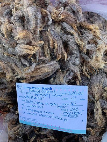 Raw Romney Lamb Fleece - Borealus