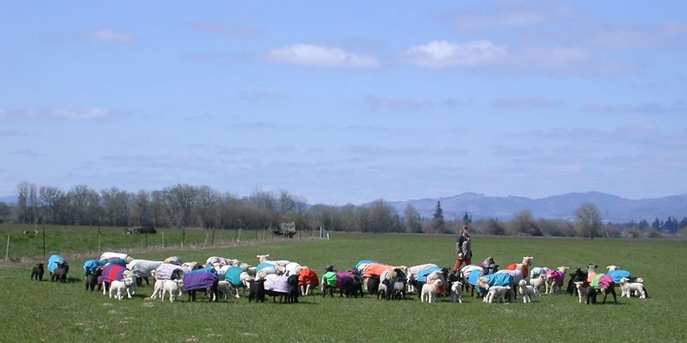 2020 IWR Lambing School