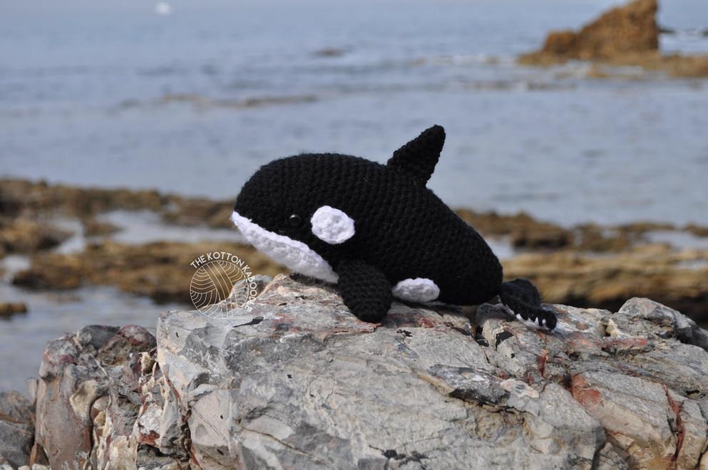 Ocean the Baby Orca