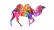 camel-3319078_1280_edited.png