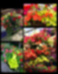 Garden Center Logan Utah | Greenhouse Logan Utah | Hanging Baskets Utah | Plants Logan Utah | Greenhouse and Garden Center serving Logan Utah and Preston Idaho.  Famous for gorgeous hanging baskets and so much more.  Come check out of Garden Center and Greenhouse for beautiful plants, flowers, hanging baskets, patio containers, vegetable starts, perennials, and so much more.