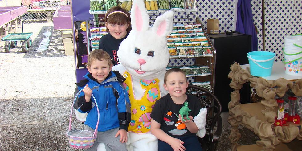 Easter Basket Planting - Purchase Kits Online
