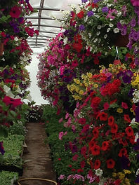 Our Hyde Park Utah Garden Center is your source of gorgeous Utah hanging Baskets..  We are the greenhouse in Logan Utah area for hanging baskets, patio containers, fairy gardens, succulents and more.