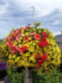 Logan Utah Garden Center | Logan Utah Greenhouse | Hyde Park Utah Greenhouse | Hyde Park Utah Garden Center | Utah Hanging Baskets | Hanging Baskets | Logan Utah Plants | Perennials | Water-wise plants | Flowers | Logan Utah Flowers