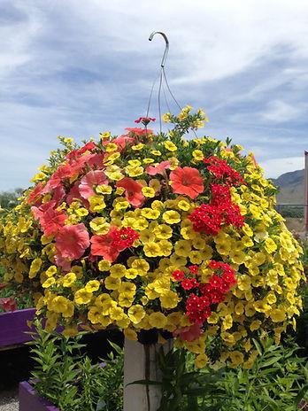 Logan Utah Garden Center | Logan Utah Greenhouse | Hyde Park Utah Greenhouse | Hyde Park Utah Garden Center | Utah Hanging Baskets | Hanging Baskets | Logan Utah Plants | Perennials | Water-wise plants | Flowers | Logan Utah Flowers