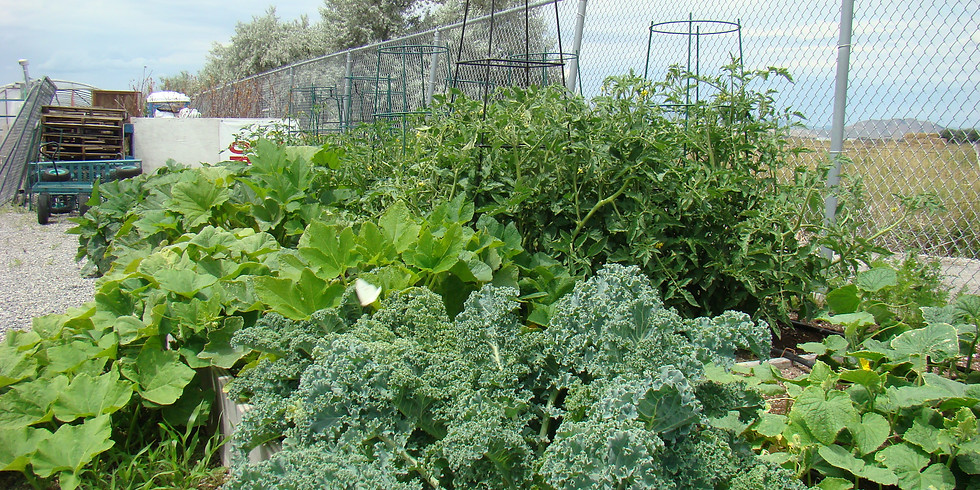 Yard and Garden Care