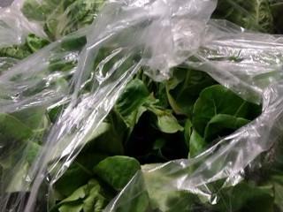 Greens, Greens, Greens . . . 15 Huge Bags
