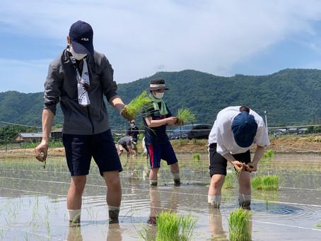 嵯峨野で田植えをしました(理工系コーオプ教育プログラム)