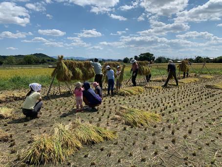 稲刈り(理工系コーオプ教育プログラム)