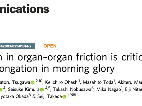 Communications Biologyに共同研究の成果を発表しました。
